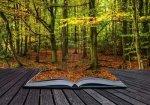 livre automne par Ph Marc Leod